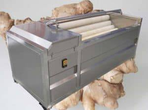 Automatic Ginger Washing Peeling Machine and Slicing Machine for Ghana Customer