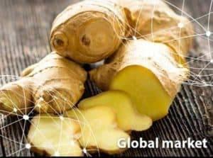 global-ginger-market-introduction