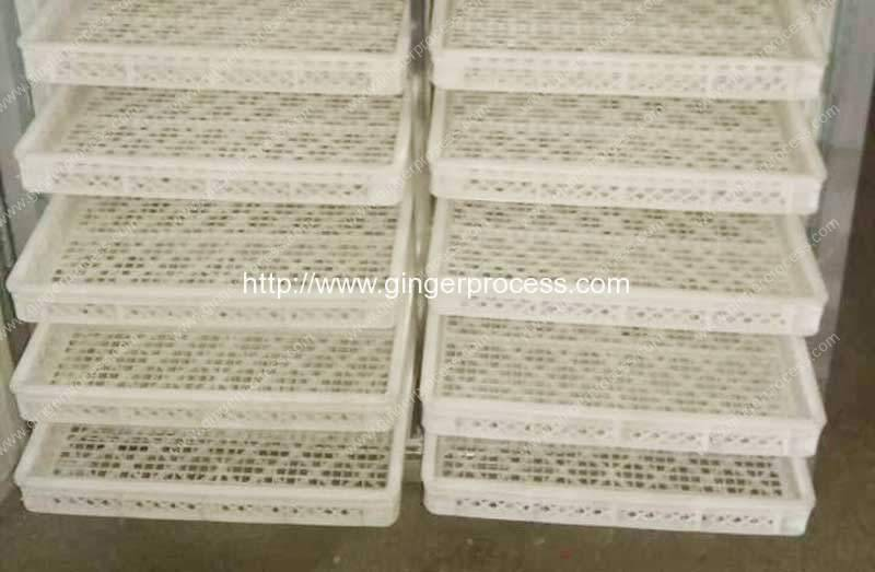 Natural-Gas-Fired-Dryer-Oven-Plastic-Plate-For Dehydrated Ginger-Slice