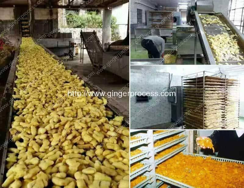 How-to-Produce-Dehydrated-Turmeric-Powder-in-Factory