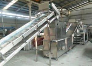 Automatic-Garlic-Slicing-Machine-in-Dehydrated-Ginger-Slice-Production-Line