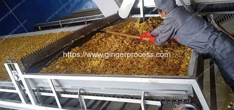 Dehydrated-Ginger-Slice-Discharge-Conveyor-with-Spreading-Function