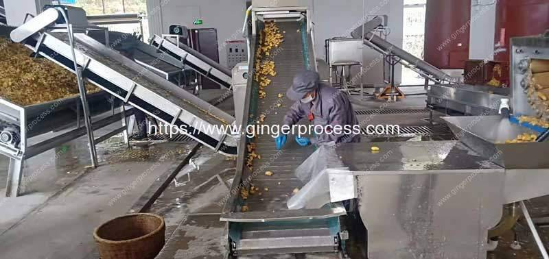 Ginger-Stone-Removing-and-Slicing-Machine